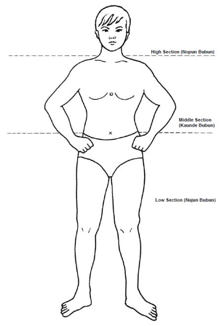 Body Sections